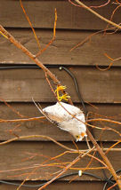 Bad morning forbirds