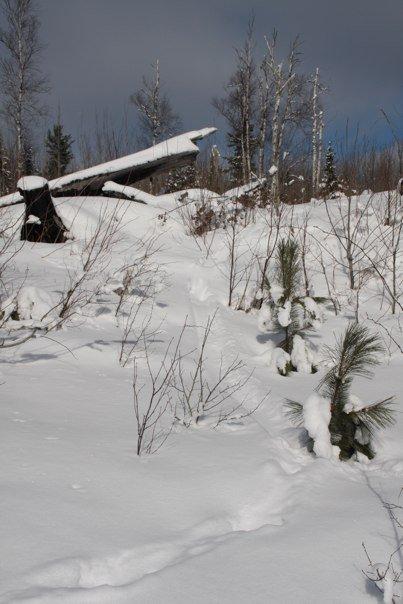 Beaver tracks on Beaver Dam trail. Photo sent by Nancy Saxhaug.