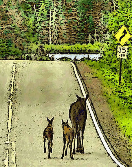 Moose family on Gunflint Trail, by Swamper, on a previous Memorial Day weekend.