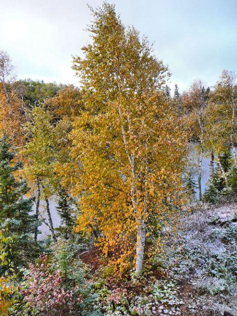 snow around birchS 10.9.09