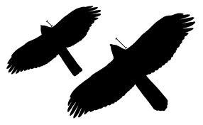 hawk shape
