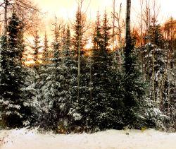 10.31.14 snow and sunrise
