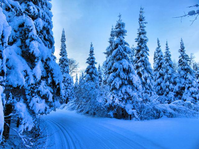 asbjorn munk ski trail4bearskin 028