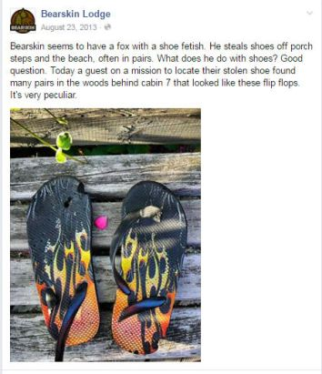 facebook post about fox shoes august 2013
