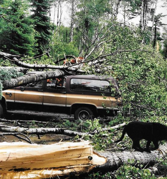 blowdown trees on brown suburban